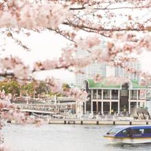 約500本の桜のトンネルをくぐりぬける『大岡川桜クルーズ』 3月24日~4月8日の期間限定・ホテル専用クルーズ船で運航サムネイル