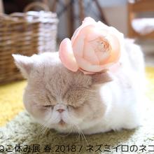 """春のねこ休み展・名古屋、見どころ""""満開""""で4/20~5/20開催!サムネイル"""