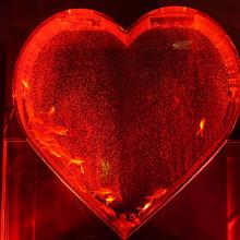 光と音の空間で1,000匹の金魚が躍る幻想的な空間を体感! ウィンターアクアリウム、12月8日から仙台フォーラスで開催サムネイル