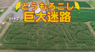 「とうもろこし巨大迷路」7/20オープン! 庄内平野・日本海まで一望できる月山高原に期間限定出現サムネイル