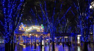 11月9日(土)にはTRICERATOPSの 和田 唱さんを迎えた点灯セレモニー開催 「たまアリ△タウン けやきひろばイルミネーション2019-20」サムネイル