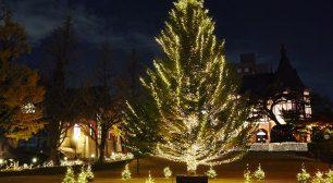 大学で夜空に輝くクリスマスツリーを堪能! 2019明治学院 クリスマスツリー点灯式開催!サムネイル