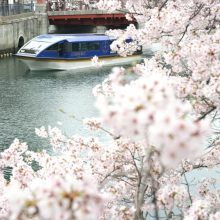 約600本の桜と横浜港のパノラマが楽しめる『大岡川桜クルーズ』 3/20~期間限定で運航!9日間限定で「夜桜クルーズ」もサムネイル