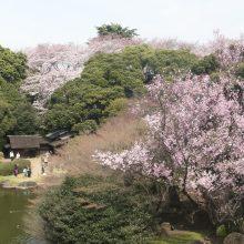 東京国立博物館「博物館でお花見を」  2020年3月10日(火)~4月5日(日)開催!サムネイル