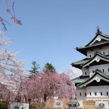 羽田空港・大阪国際(伊丹)空港 JAL国内線ラウンジで 桜の名所「弘前公園」の桜をひと足早く咲かせます  3月20日(祝・金)~3月25日(水)期間限定サムネイル