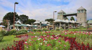 ぐんまフラワーパークでアンティークと花がテーマのマーケット 「第3回 古花市 ~Antique Floral Market~ 2020」 9月26日(土)・27日(日)開催!サムネイル