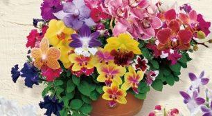 国際的な蘭の祭典「世界らん展2021-花と緑の祭典-」開催サムネイル