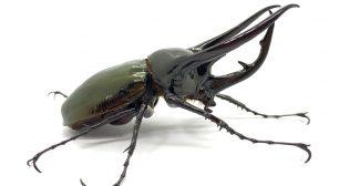 大人気のカブトムシやクワガタなど昆虫作品が一挙集結! レア種とのふれあい体験も! 「カブトムシたちの世界展 2021」7/22~8/15 東京で開催サムネイル