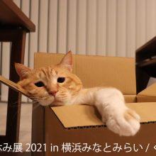 初の秋開催!SNSで人気の猫作品は癒し度MAX&限定イベント実施 「ねこ休み展 2021 in 横浜みなとみらい」10/9~10/24開催!サムネイル
